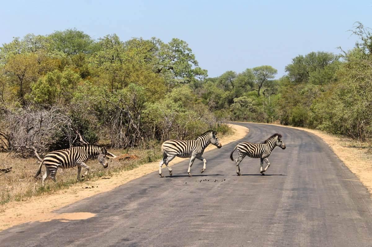 Safari-en-famille.jpg